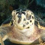 Underwater image of sea turtle face Stock Photos