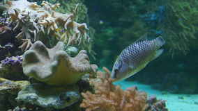Underwater image of tropical fish stock footage
