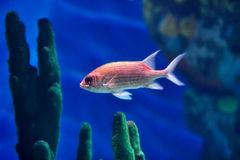 Underwater image of tropical fish Stock Photo