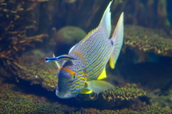 Underwater image of tropical fishes Stock Photos