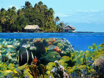 Underwater island Royalty Free Stock Images