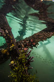 Underwater of Kakaban in Derawan, Kalimantan, Indonesia Royalty Free Stock Photos