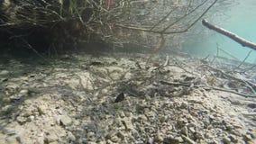 Underwater lake bank. Handheld slow motion underwater shot of shallow bottom by lake bank stock video footage