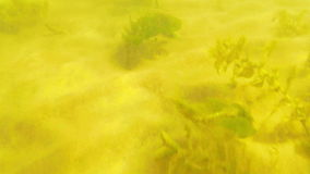 Underwater lake bottom. The camera quickly moves along the bottom of the lake stock footage