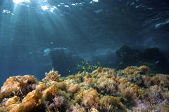 Underwater Landscape Royalty Free Stock Photos