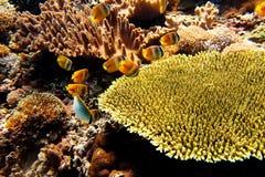 Underwater landscape Stock Images