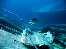 Underwater landscape. With boat fragments and fish. The Red Sea stock image