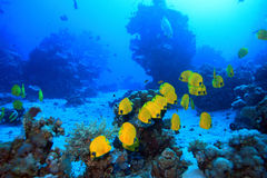 Underwater landscape Stock Photos