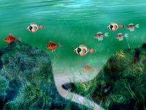 Underwater Landscape Stock Photography