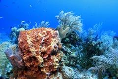 Underwater landscape Royalty Free Stock Photos