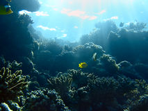 Underwater landscape. In the red sea Royalty Free Stock Photography