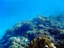 Underwater landscape. Viw of coral reef in Red sea Royalty Free Stock Photos