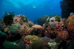 Underwater scene and background. Aquarium type image taken at deep Stock Photography