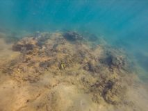 Underwater landscape background with corals and fish.  royalty free stock photography
