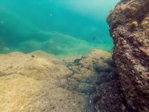 Underwater landscape background with corals and fish.  royalty free stock photos