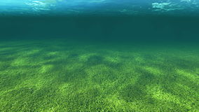 Underwater landscape with a camera from the surface of the water goes directly below the surface. Animation-Underwater landscape with a camera from the surface stock footage
