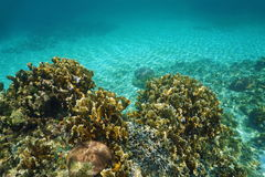 Underwater landscape in a Caribbean coral reef Royalty Free Stock Photos