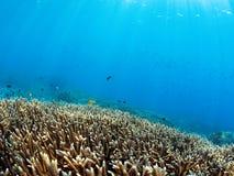 Underwater landscape Stock Image