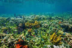 Underwater landscape on a colorful seabed Royalty Free Stock Image