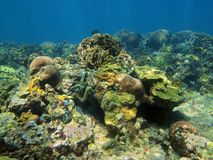 Underwater landscape in coral reef Caribbean sea Royalty Free Stock Photos