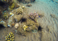 Underwater landscape with coral reef. Colorful corals diversity in tropical sea aquatory. Royalty Free Stock Photography