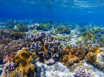 Underwater landscape with coral reef. Coral undersea photo. Seashore texture. Coral closeup. Sea bottom with young coral ecosystem. Tropical seashore Royalty Free Stock Images