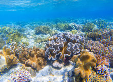 Underwater landscape with coral reef. Coral undersea photo. Seashore view. Stock Image