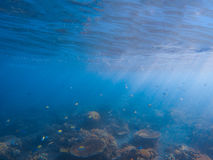 Underwater landscape with coral reef. Corals with tropical fishes colony. Blue sea and tropical seabottom photo. Sea animals and plants. Exotic seashore Royalty Free Stock Image