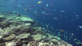 Underwater landscape of coral reef. Maldives. Underwater landscape of coral reef. Amazing, beautiful underwater marine life world of sea creatures in Maldives stock footage