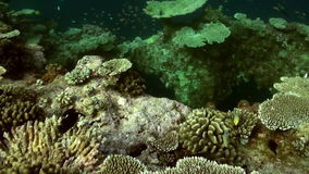 Underwater landscape of coral reef. Maldives. Underwater landscape of coral reef. Amazing, beautiful underwater marine life world of sea creatures in Maldives stock video