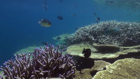 Underwater landscape of coral reef. Maldives. stock video