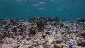Underwater landscape of coral reef. Maldives. stock video footage