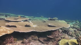 Underwater landscape of coral reef. Maldives. stock footage