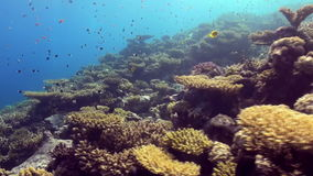 Underwater landscape of coral reef. Red Sea. stock footage