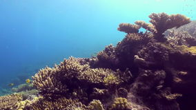 Underwater landscape of coral reef. Red Sea. Underwater landscape of coral reef. Amazing, beautiful underwater marine life world of sea creatures in Red Sea stock footage