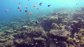 Underwater landscape of coral reef. Red Sea. Underwater landscape of coral reef. Amazing, beautiful underwater marine life world of sea creatures in Red Sea stock video
