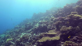 Underwater landscape of coral reef. Red Sea. stock video