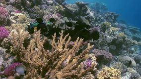 Underwater landscape of coral reef. Red Sea. stock video footage