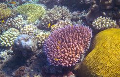 Underwater landscape with coral reef and tropical fish. Colorful coral undersea photo. Sea bottom with coral ecosystem. Tropical seashore snorkeling. Marine Stock Image