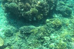 Underwater Landscape. Coral reef in tropical sea at Gili meno. Lombok, Indonesia.  Royalty Free Stock Photos