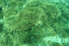 Underwater Landscape. Coral reef in tropical sea at Gili meno. Lombok, Indonesia.  Stock Photos
