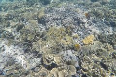 Underwater Landscape. Coral reef in tropical sea at Gili meno. Lombok, Indonesia Royalty Free Stock Image