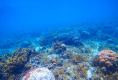 Underwater landscape with coral reef. Tropical seashore ecosystem. Royalty Free Stock Images