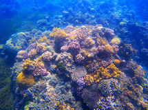 Underwater landscape with coral reef under sunlight. Diverse coral formation with seaweed. Stock Photos