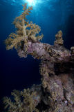 Underwater Landscape : Corals Stock Photos