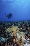 Underwater landscape with diver. A scuba diver is exploring an underwater reef landscape in deep blue water royalty free stock photography
