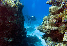 Underwater landscape with divers Stock Photo