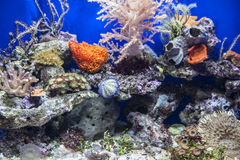 Underwater landscape. The first floor of a beautiful underwater scenery in Italy Royalty Free Stock Photo
