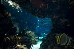 Underwater landscape with fishes Stock Image