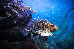 Underwater Landscape with Fishes in oceanarium Stock Images